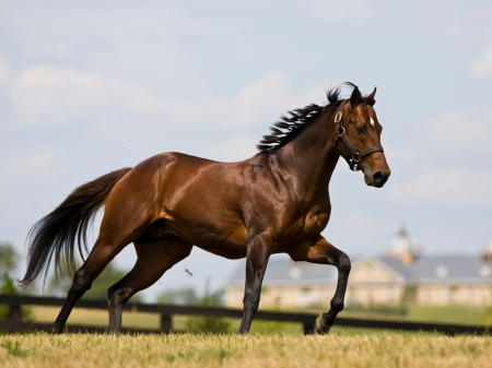 The horse is one of God's great creations...