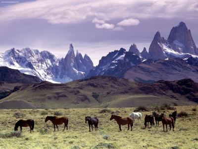 The Patagonia, in South America.